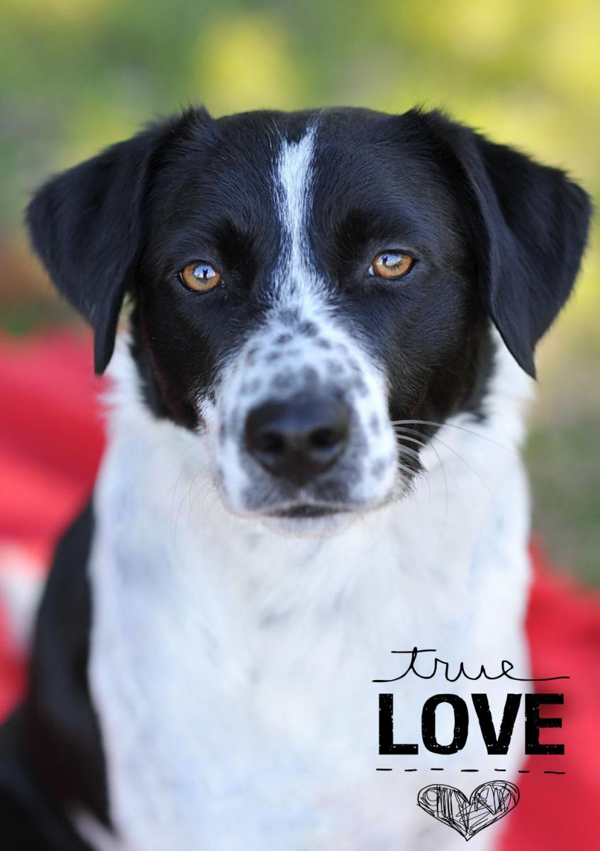 Available @ www.centraltexasspca.org, a local no-kill rescue shelter
